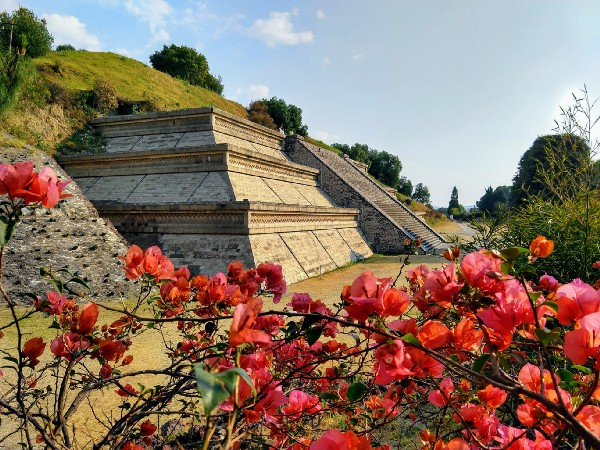 hillside with a section of a tiered pyramid exposed, red flowers in the foreground